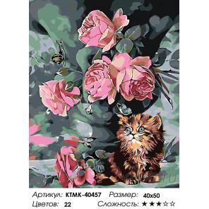 Количество цветов и сложность Крошечный котенок Раскраска по номерам на холсте Живопись по номерам KTMK-40457
