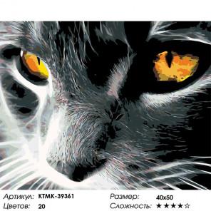 Количество цветов и сложность Янтарный взгляд Раскраска по номерам на холсте Живопись по номерам KTMK-39361
