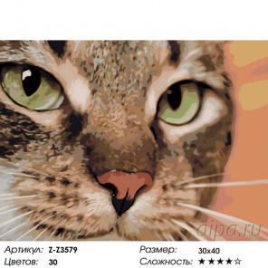 Количество цветов и сложность Хищный кот Раскраска по номерам на холсте Живопись по номерам Z-Z3579