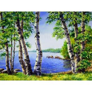 Березы у озера Алмазная вышивка мозаика АЖ-1340