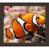 В рамке Рыба клоун Алмазная вышивка мозаика АЖ-1061