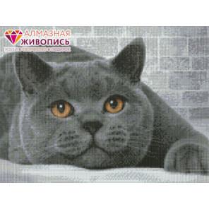 Британский кот Алмазная вышивка мозаика АЖ-1463