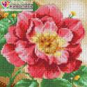 Цветущий пион Алмазная вышивка мозаика АЖ-1444
